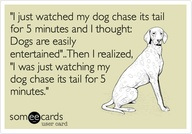 dog-chasing-tail